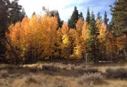 meadow & aspens