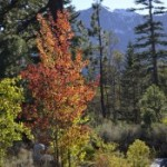 Fall Favorite – Walk at Taylor Creek Visitor Center