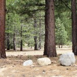 South Lake Tahoe Lot for Sale – 2559 Blitzen Road
