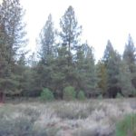 Truckee Lot For Sale – 11670 Bottcher Loop